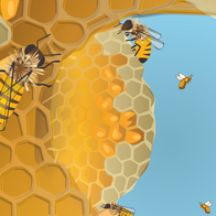 Communication within the hive
