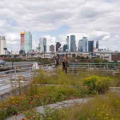 urban gardens welcome pollinators