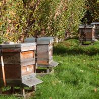 humanmade hives