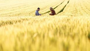 Australian Agricultural Export Legislation