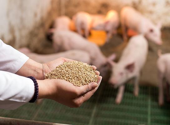 Veterinarian holding dry food in granule