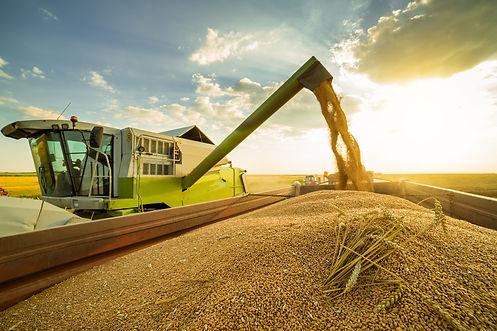 Wheat%20harvest%20shutterstock_507311920