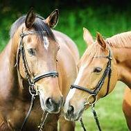 horses x 2.jpg