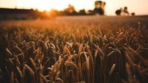 Invitation - Seasonal update for the grains and feed sector