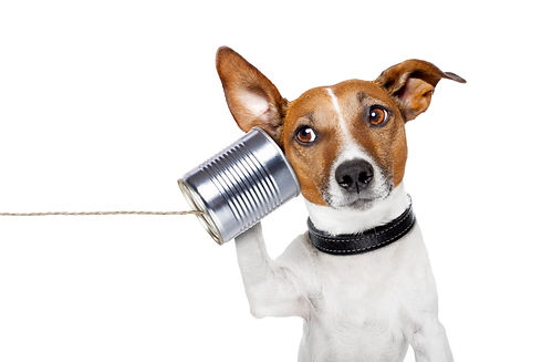 dog on the phone with  a can.jpg