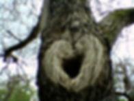 treebutthole.jpg