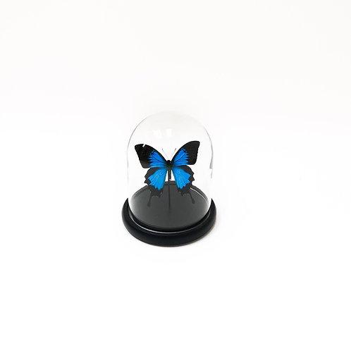 Bell Jar Butterfly