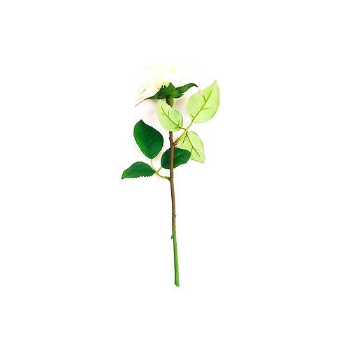 Equador Rose