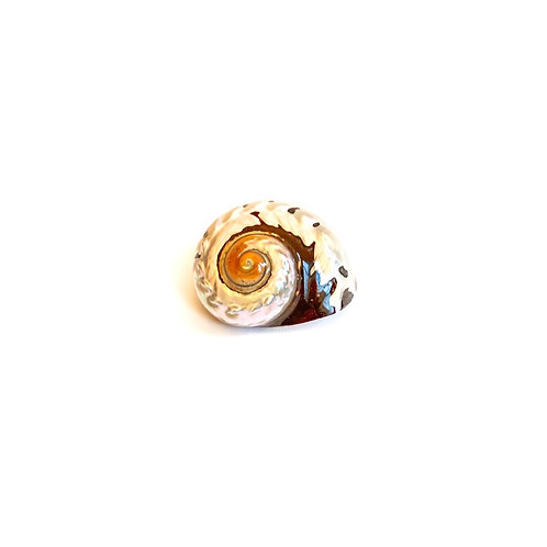 Turbo Sarmaticus SeaShell (Extra Pearl)