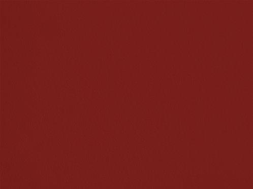 Genêt de l'Etna – C08