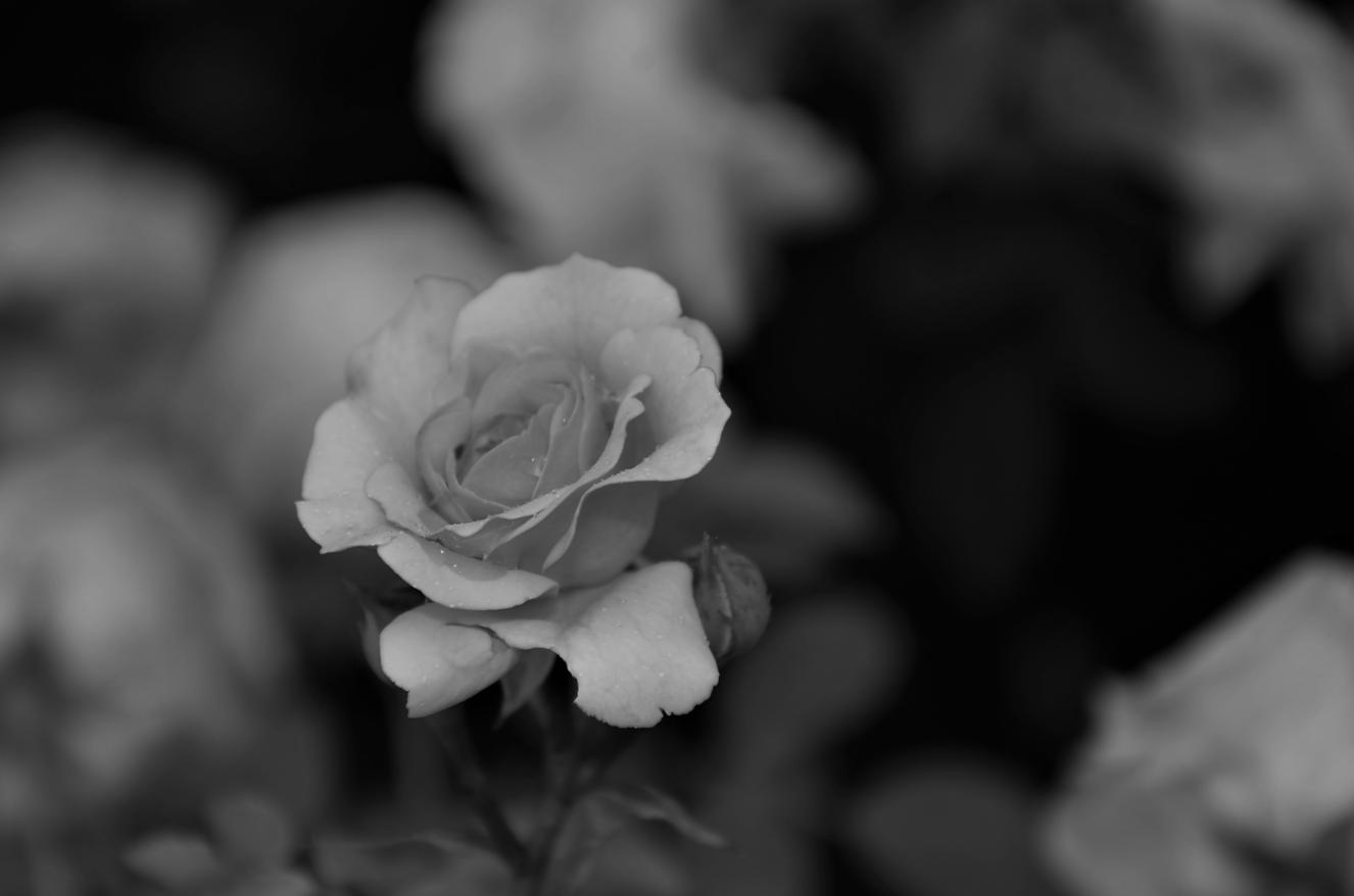 Photographie Florale
