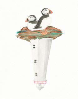 Cape Spear Lighthouse X Puffins