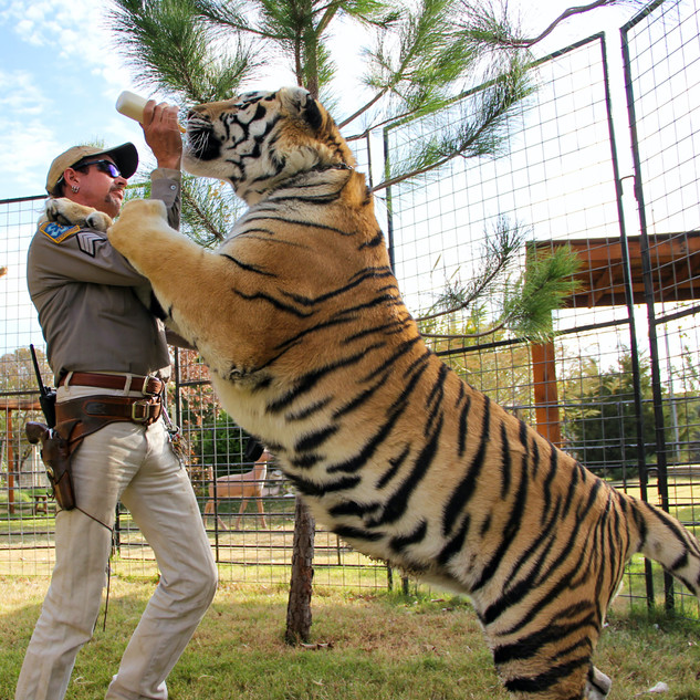 THE U.S. BIG CAT TRADE: CONSERVATION OR COMMODIFICATION?