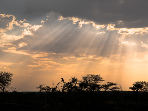 Sunset rays piercing through the clouds during a bush walk in Serengeti National Park.