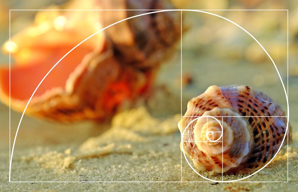 """""""Customer Journey"""" najlepiej przedstawić przy pomocy ślimaka, a właściwie Ciągu Fibonacciego. Sekwencji liczbowej obrazującej rozwój pomysłu, idei, koncepcji..."""