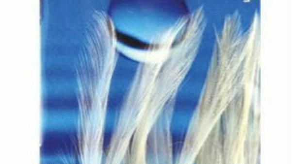 White feathers - 6 hooks size, 1/0 - wsb