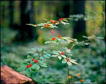 nature (4).jpg