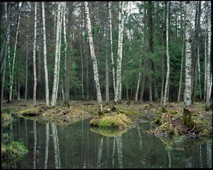 nature (2).jpg