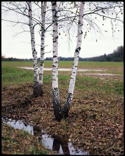 nature (3).jpg