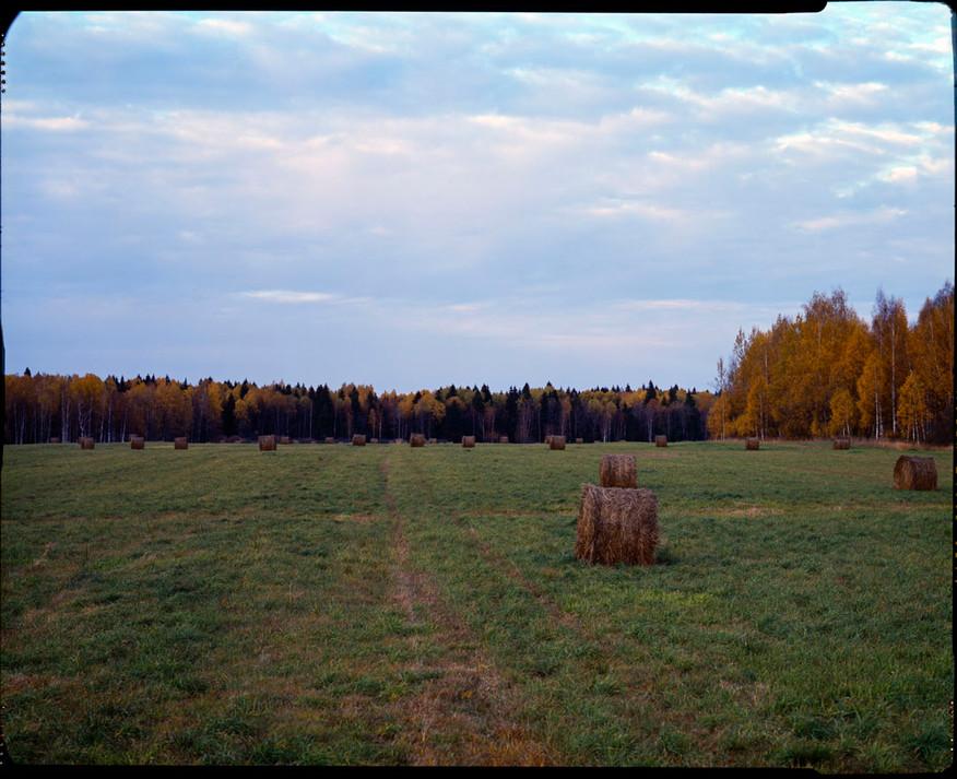 nature (8).jpg