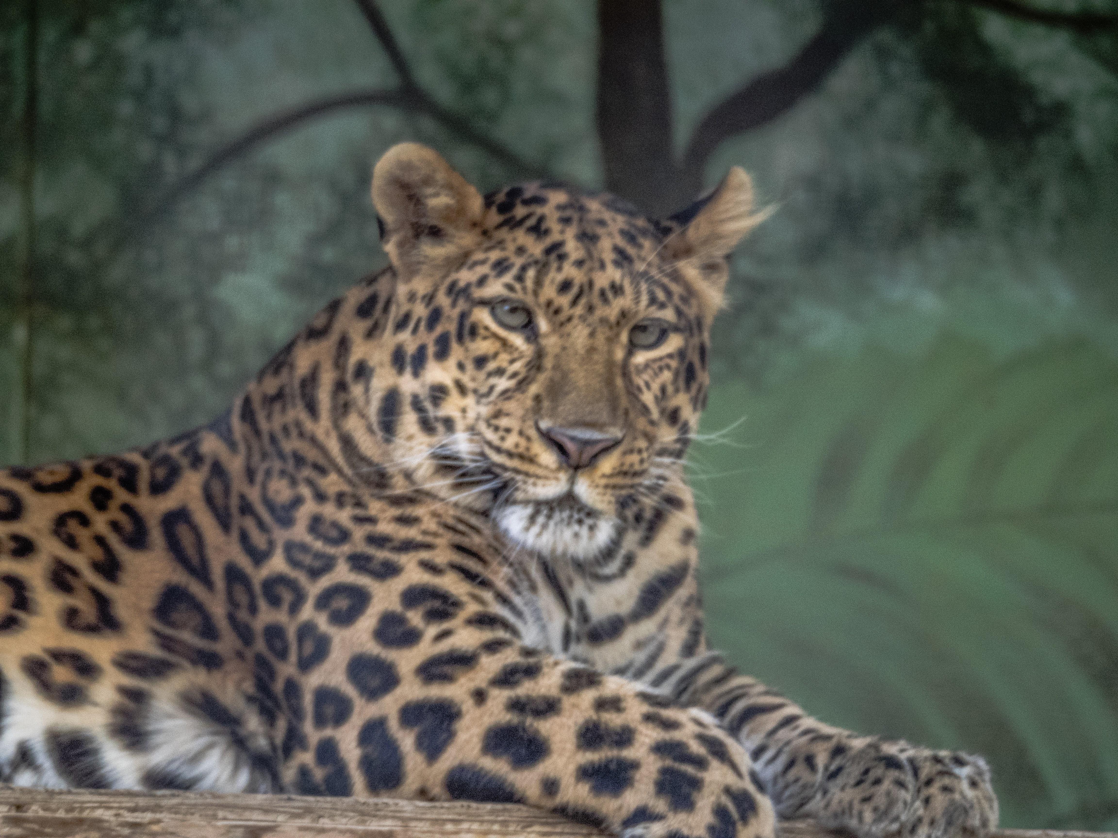 Feline Conservation Cntr., Rosamond