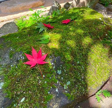 苔生した石と紅葉.jpg