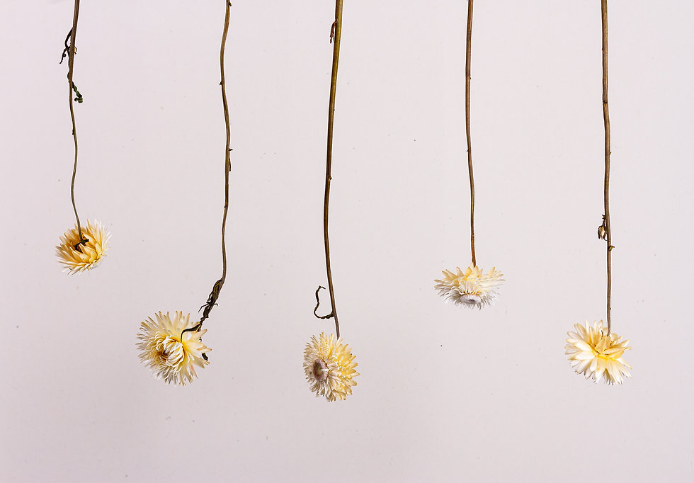 Hanging dried flowers - Little Ant Store