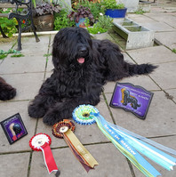 Demi photo after getting BEST in SHOW at the Briard Association Champ show