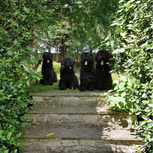 My Briard's - Group picture