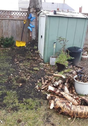 Damaging root pruning