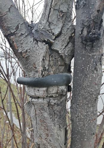 Post planting neglect