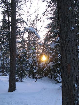 Sunset through a winter forest