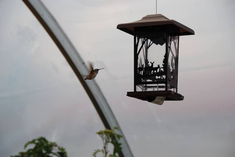 Humming Bird & Feeder