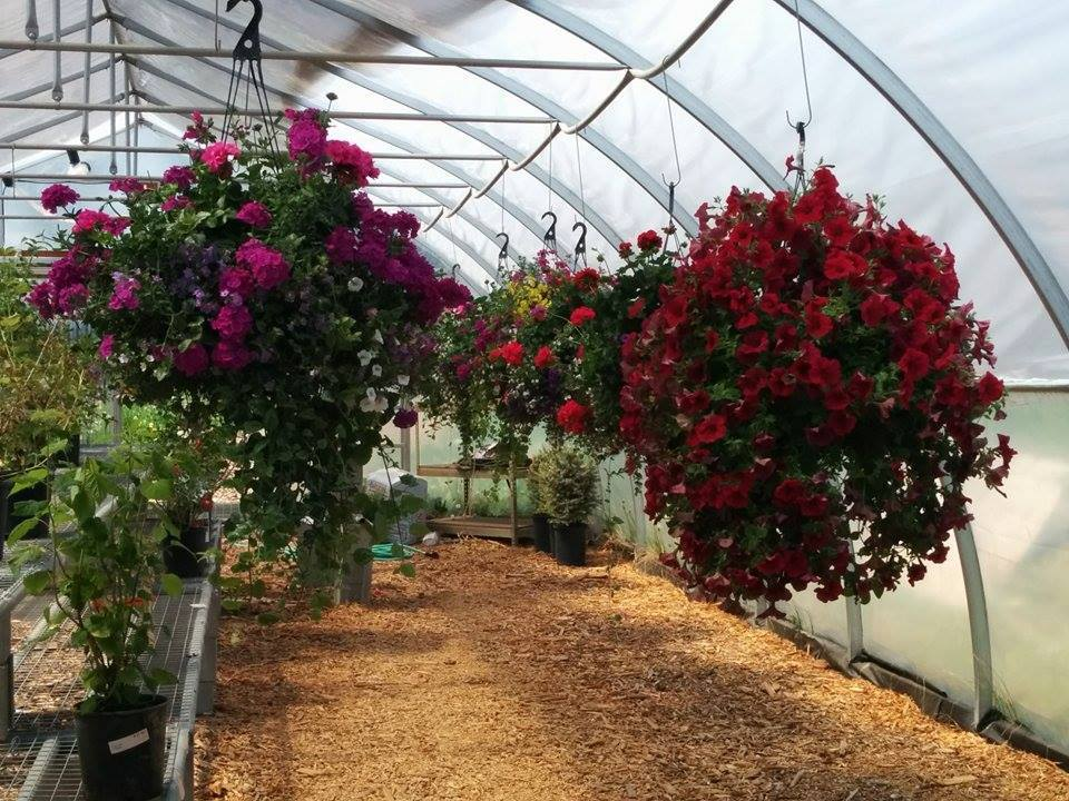 Greenhouse Flower Baskets