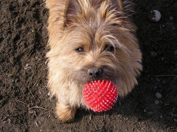 Dog & Wiggles