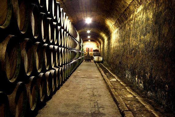 Spain Rioja Basque Country vineyard wine