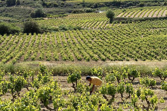 spain-rioja-villabuena basque country vineyard wine