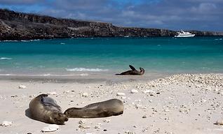 Integrity - Galapagos - Seals.png