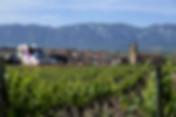 spain-rioja-wine vineyard basque country