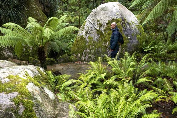 portugal-sintra-gardens-giant-ferns-2_ed