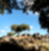 portugal-alentejo-marvao-cork-oak-hiking walking tour
