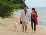 Walk with a pet pelican.