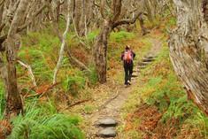 Walk an enchanted forest.