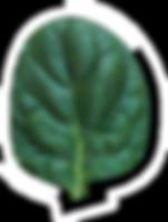 leaf-alt.png