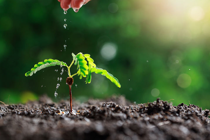 farmer-hand-watering-young-baby-plants.j