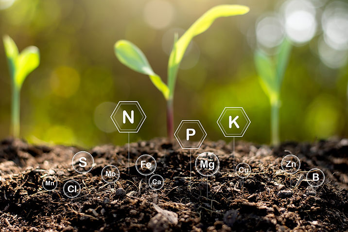 soil-is-rich-minerals-various-nutrients-