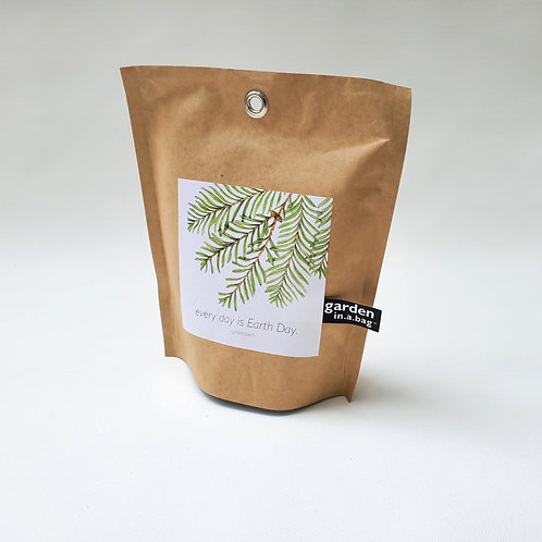 Garden in a Bag // Dawn Redwood