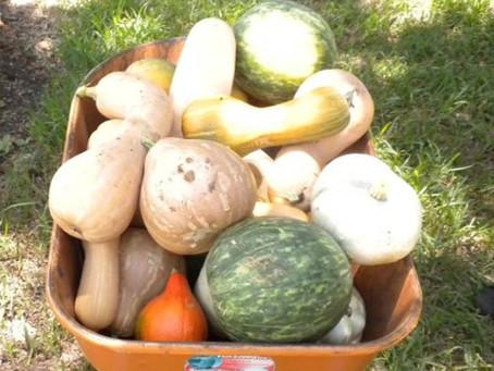 Harvest Time Farmer's Markets!