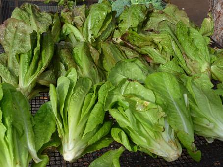 Organic Produce - Week 5 of CSA!