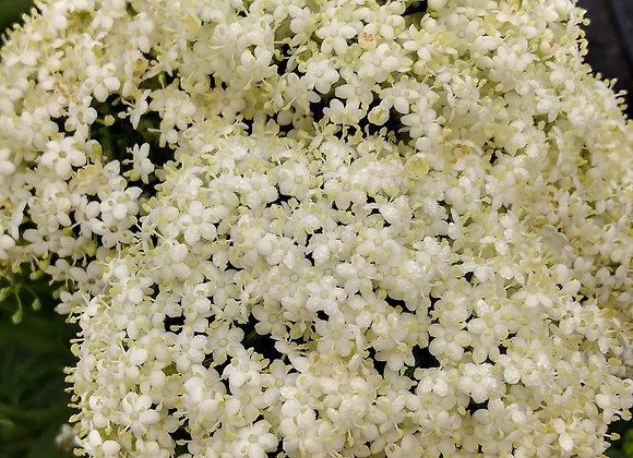Edible Flowers, Elderberry